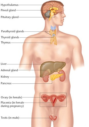 Endocrine_ResearchPage